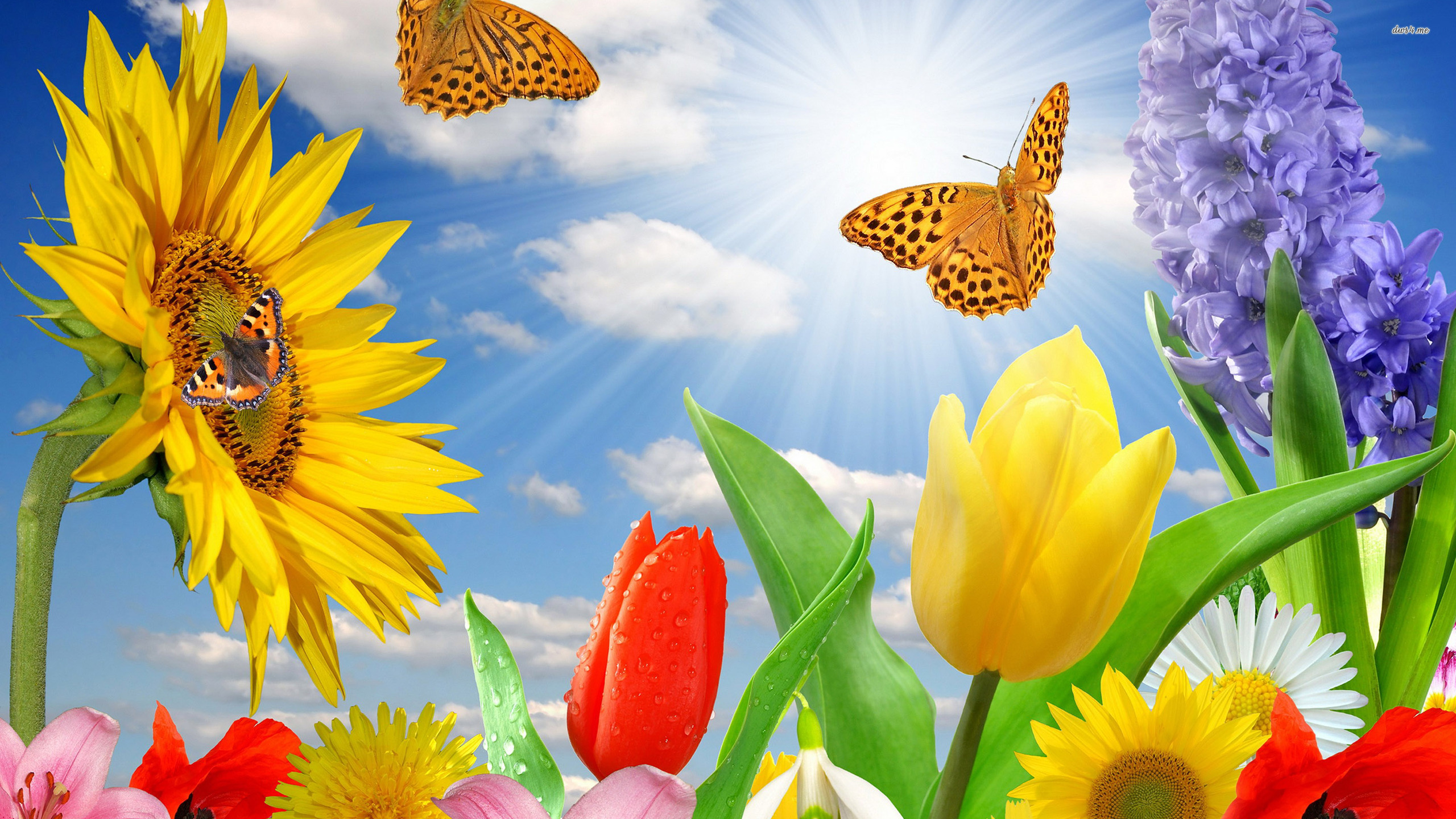 Spring Flowers And Erflies Background Hd Cool 7